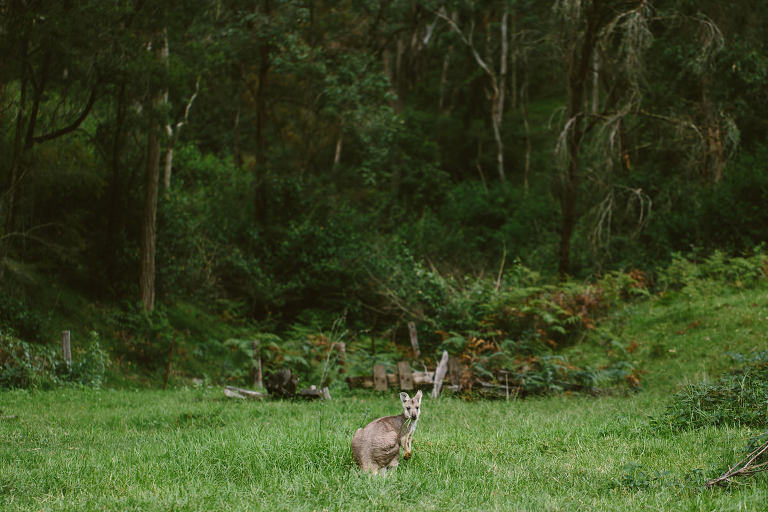 blair athol estate wollombi wedding